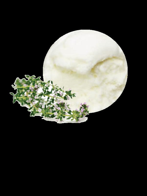Timó/Farigola (sorbet 2,5 litres)